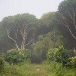 Тропическите гори на Златния триъгълник