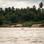 Речни делфини в Меконг